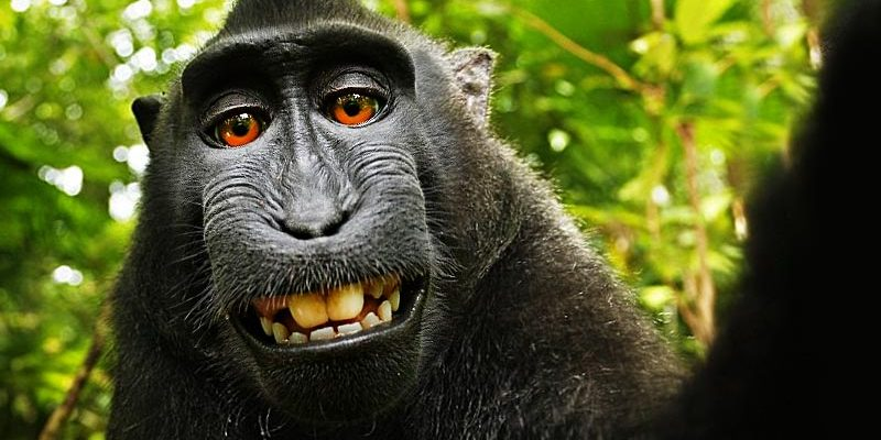 The Posthuman and the Monkey Selfie